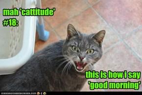 mah 'cattitude' #18: