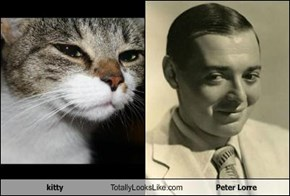 kitty Totally Looks Like Peter Lorre