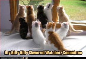 Itty Bitty Kitty Skwerrul Watcherz Committee