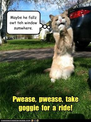 Pwease,  pwease,  take  goggie  for  a  ride!