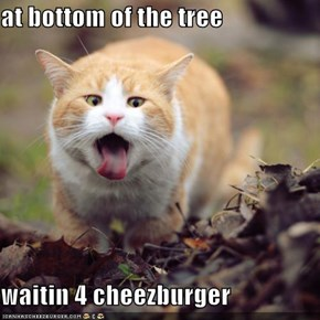 at bottom of the tree  waitin 4 cheezburger