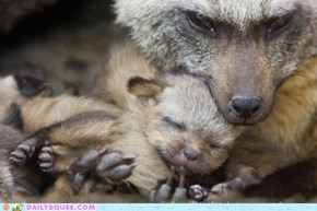 OH MY SQUEE ITTY BITTY FOX!