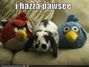 i hazza pawsee