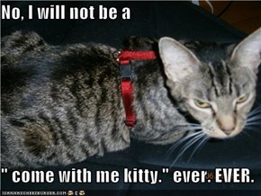 "No, I will not be a  "" come with me kitty."" ever. EVER."