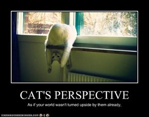 CAT'S PERSPECTIVE