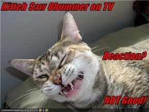 Kitteh Saw Obummer on TV Reaction? NOT Good!