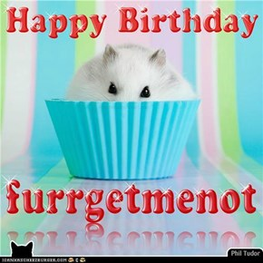 Happy Birthday furrgetmenot . . . . . . . . . . . . . . . . . . . . . . . . . .