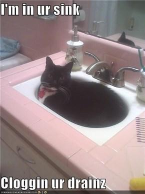 I'm in ur sink  Cloggin ur drainz