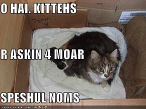 O HAI. KITTEHS R ASKIN 4 MOAR SPESHUL NOMS
