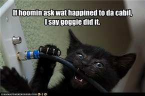 If hoomin ask wat happined to da cabil, I say goggie did it.