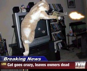 Breaking News - Cat goes crazy, leaves owners dead