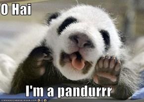 O Hai  I'm a pandurrr