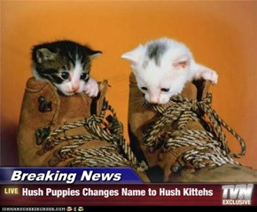 Breaking News - Hush Puppies Changes Name to Hush Kittehs