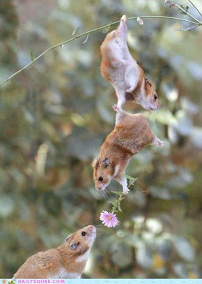 romantic squirrels