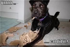 Uhhhh ...  ...... cat did it?