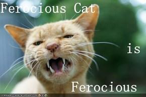 Ferocious Cat is Ferocious