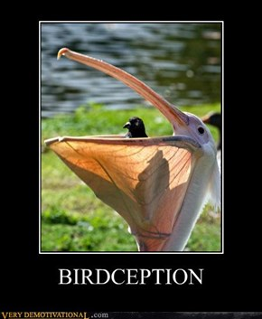 BIRDCEPTION