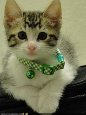 Cyoot Kitteh of teh Day: Iz a Collar Ai Kann Grow Intew
