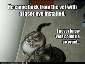 Shoulda listened to teh kitteh!