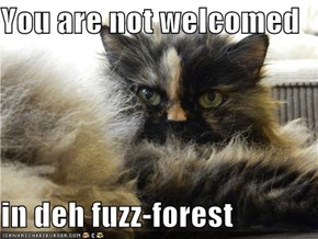 You are not welcomed  in deh fuzz-forest