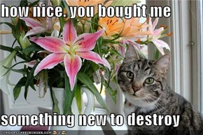 how nice. you bought me  something new to destroy