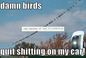damn birds  quit shitting on my car!