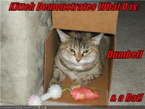 Kitteh Demonstrates What O is: Dumbell  & a Rat!