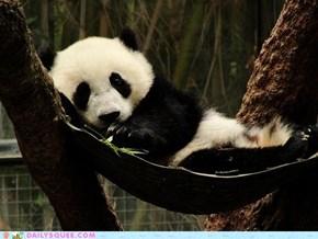 Panda Hammock FTW