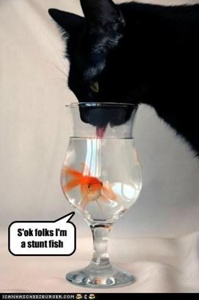 S'ok folks I'm a stunt fish