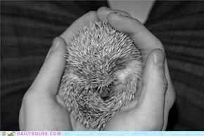 Squee Spree: Saying So Long to the Hedgie Hegemons