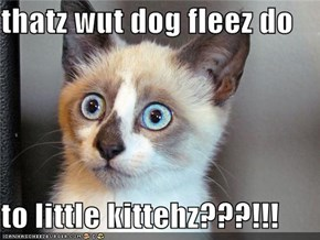 thatz wut dog fleez do  to little kittehz???!!!
