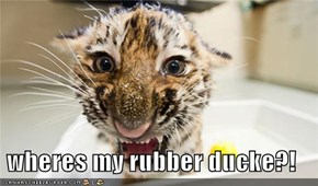 wheres my rubber ducke?!
