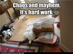 Chaos and mayhem.It's hard work.