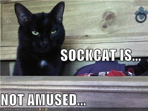 SOCKCAT IS... NOT AMUSED...