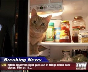 Breaking News - Kitteh discovers light goes out in fridge when door closes. Film at 11...