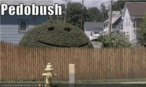 Pedobush