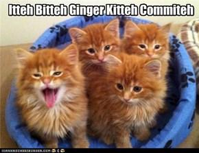 Itteh Bitteh Ginger Kitteh Commiteh
