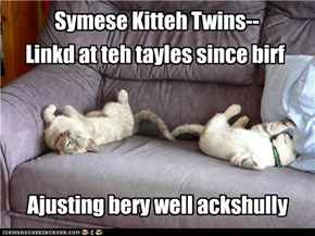 Symese Kitteh Twins--