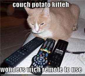 couch potato kitteh  wonders wich remote to use