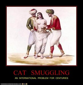 CAT   SMUGGLING