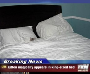 Breaking News - Kitten magically appears in king-sized bed