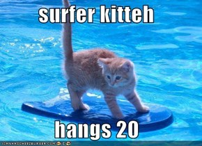surfer kitteh  hangs 20