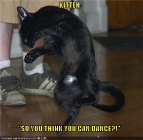"KITTEH:  ""SO YOU THINK YOU CAN DANCE?!"""