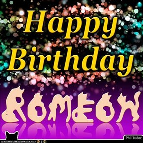 Happy Birthday Romeow . . . . . . . . . . . . . . . . . . . . . . . . . . . . .