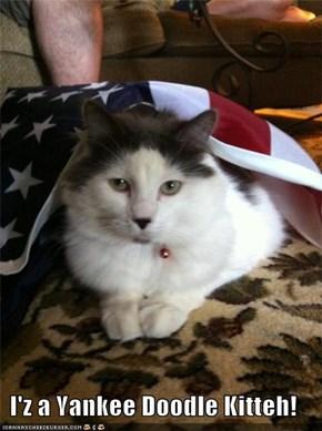 I'z a Yankee Doodle Kitteh!