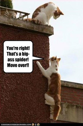 You're right! That's a big-ass spider!  Move over!!