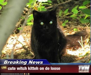 Breaking News - cute witch kitteh on de loose