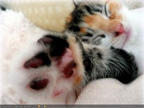 Cyoot Kitteh of teh Day: Kome a Lil' Closer Sew Ai Can Slapz Ur Fayse