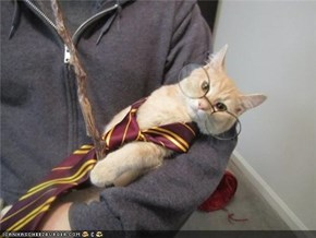 Cyoot Kitteh of teh Day: Ur a Kitteh, Harry!