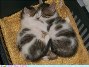 Snuggling Siblings